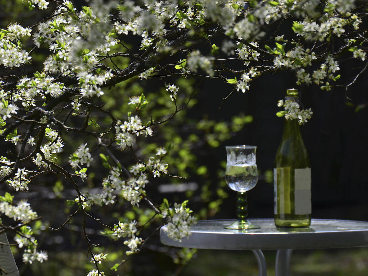 桜とのマリアージュを楽しむ、2015年のお花見酒_1