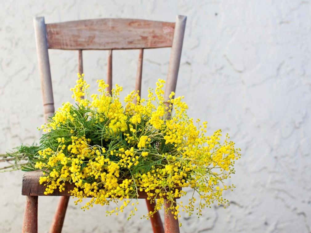 イタリアでは3月8日に「ミモザの日」として、女性たちへミモザの花を贈ります