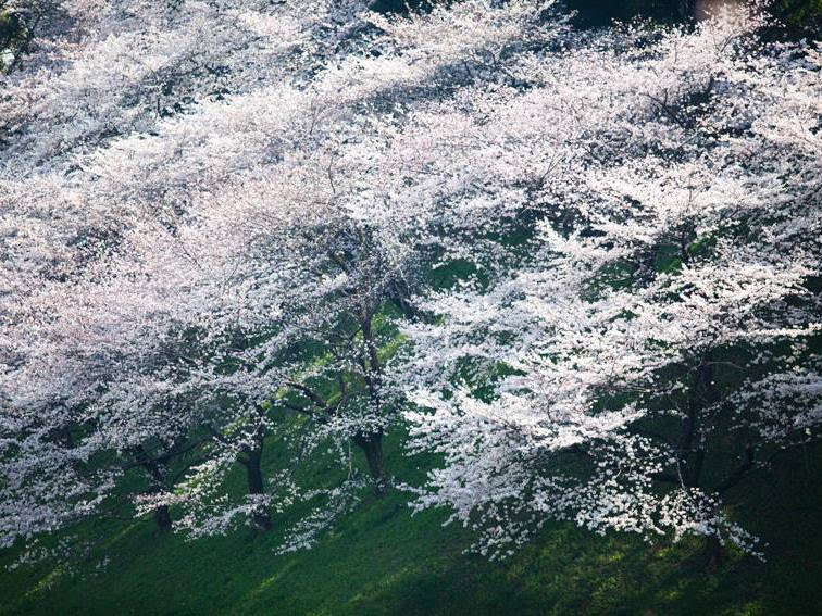 花と食で彩る日本の暦〜二十四節気『清明』_1