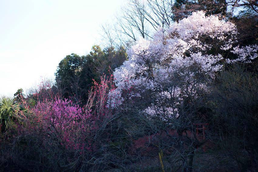 花と食で彩る日本の暦〜二十四節気『清明』_2