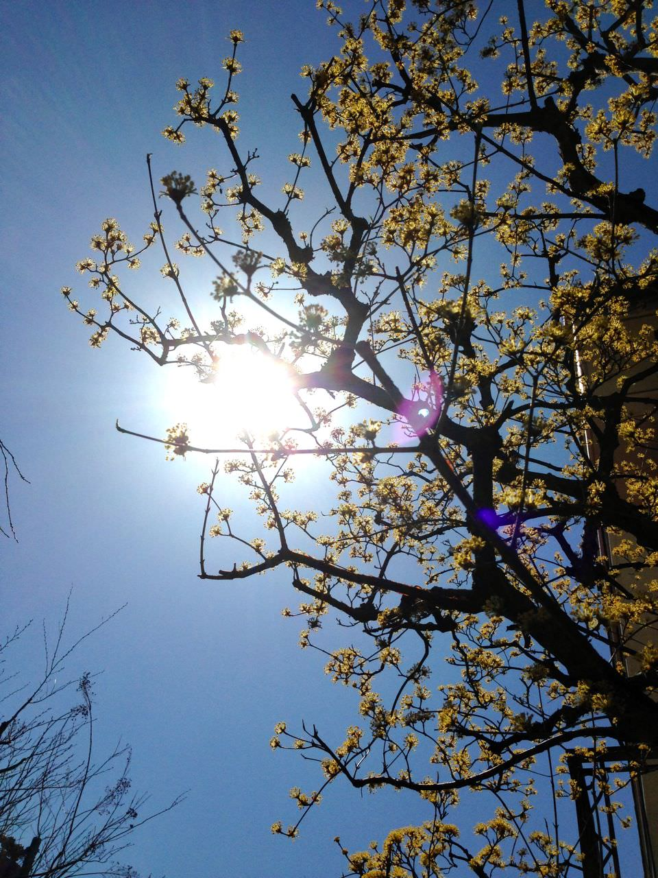 花と食で彩る日本の暦〜二十四節気『清明』_3