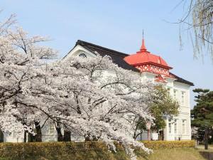桜を追って東北へ。食の理想郷、鶴岡のお花見_02
