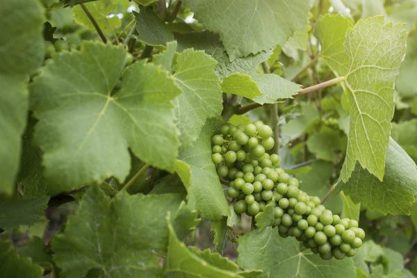 ソムリエリーダー宮沢さんの「いま飲みたい」初夏の白ワイン3選_4