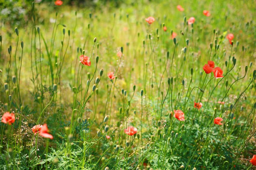 花と食で彩る日本の暦〜二十四節気『立夏』_1