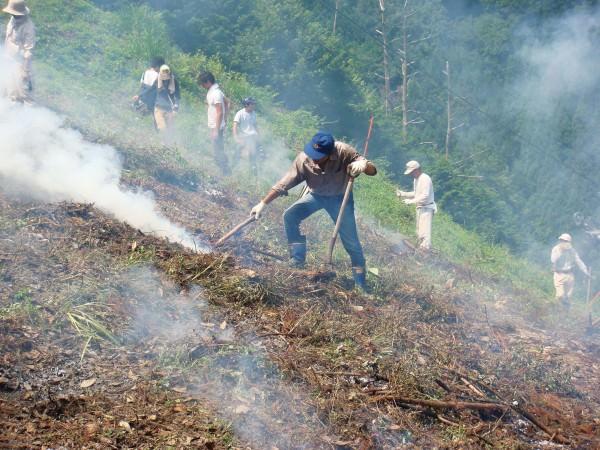 伝統農法「焼畑」育ち。余呉の「山かぶ」は強く、たくましく、滋味豊か_2