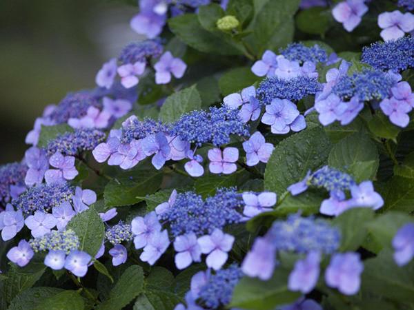 花と食で彩る日本の暦〜『入梅』、『夏至』_3