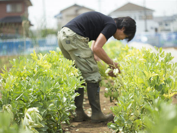 武井敏信さんが野菜を収穫している画像