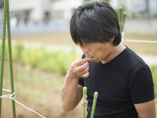 採った野菜をかじる武井さんの画像