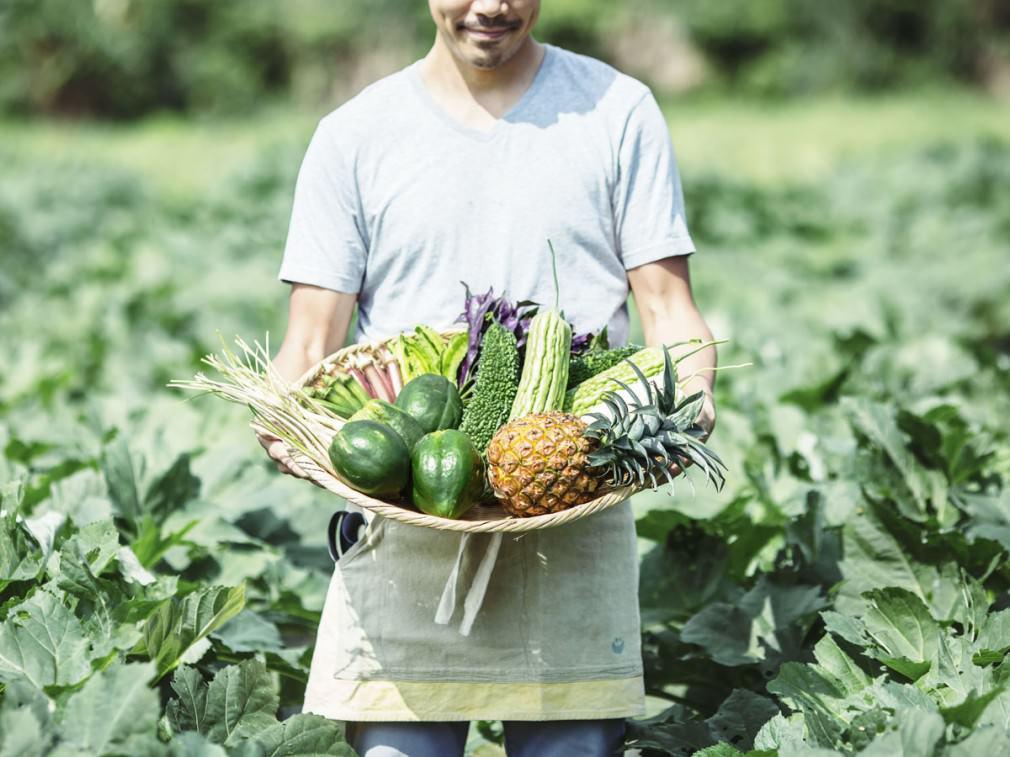 自然の恵みたっぷりの「やんばる野菜」で沖縄のパワーをチャージ!_1