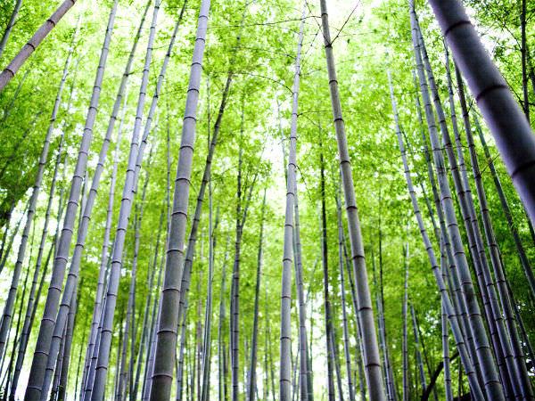花と食で彩る日本の暦〜『七夕』、『小暑』と『大暑』_02