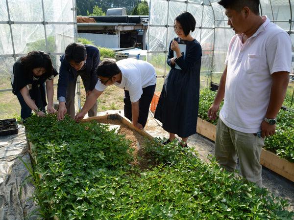 「tabel」で知る、日本の薬草の滋味深き世界_2