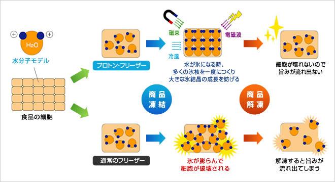 プロトン凍結の仕組みを表す図