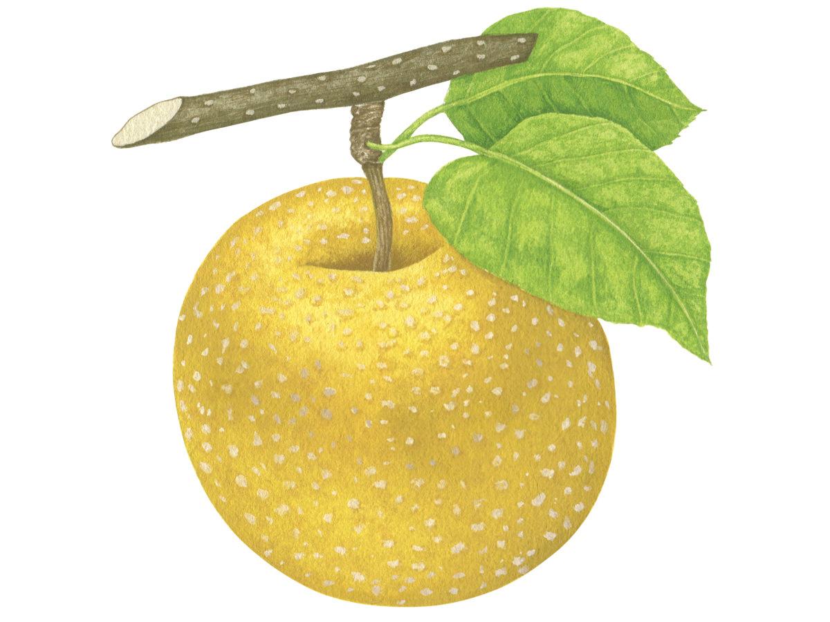 夏にうってつけのフルーツ「梨」。いますぐ食べたい、注目の3品種_1