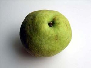 夏にうってつけのフルーツ「梨」。いますぐ食べたい、注目の3品種_4