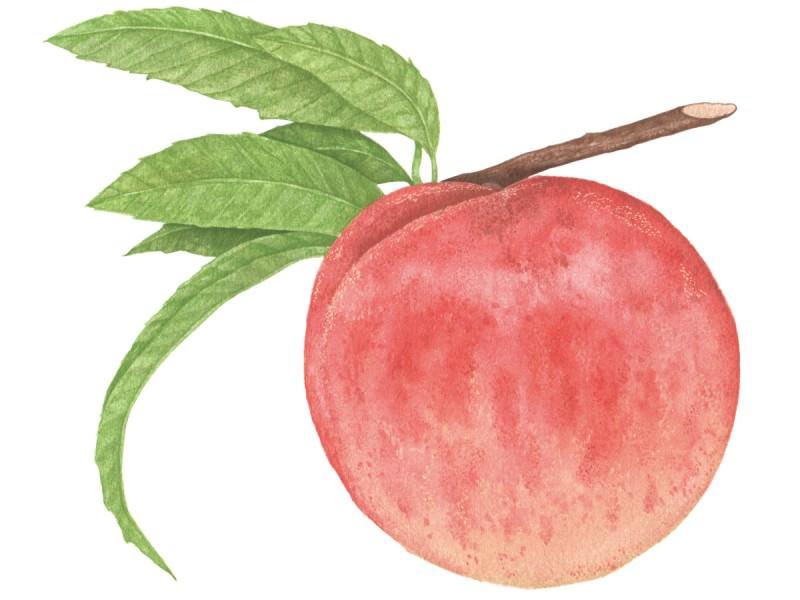 より甘く、美しく……。進化した日本の「桃」を、この夏に贈りたい_1