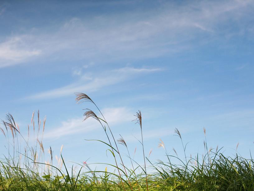 草原を輝かせる穂すすきと秋の空