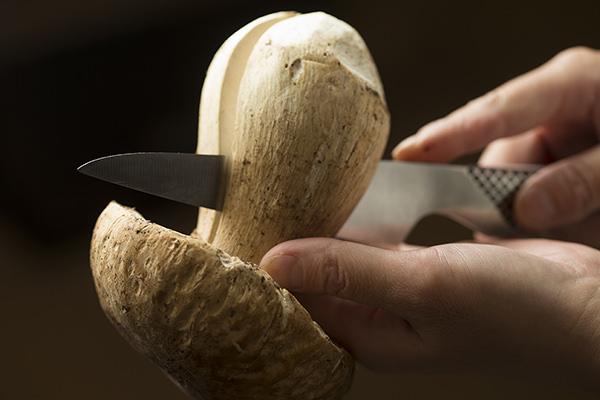 生のポルチーニ茸を半分に切っているところ