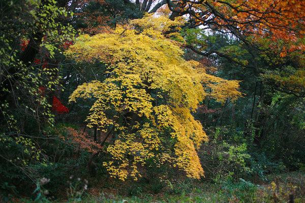 様々な色合いを見せる木々