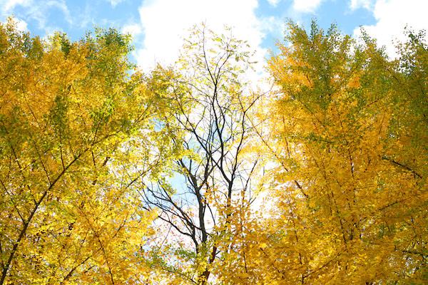 木々の隙間から見える秋の空
