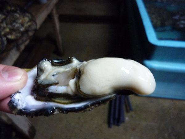 広島県呉市産牡蠣