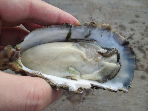 福岡県門司産牡蠣