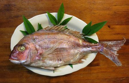 初めて魚肉を食べさせる儀式「真魚始め」