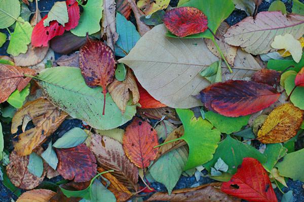 色とりどりの落ち葉