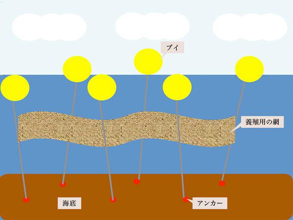 海苔の栽培方法「浮き流し養殖」