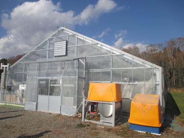 北海道でマンゴーを栽培するための特別な温室