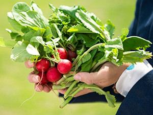 力強くしみじみする味わい「坂ノ途中」が提案する野菜が元気をくれる