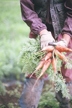 葉つきにんじんを手にする生産者