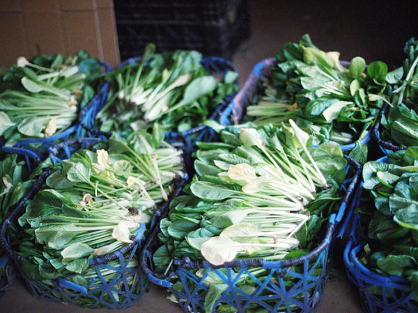 千葉県銚子から届いた小松菜