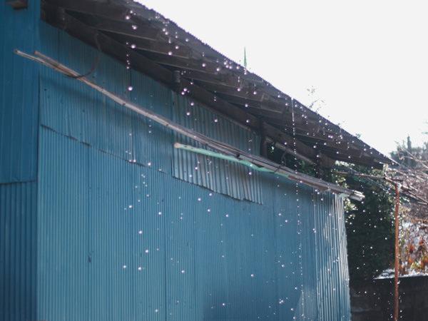 雨水が滴るトタン