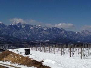 中央葡萄酒の畑の様子