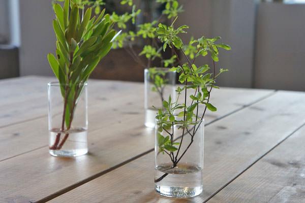 植物を活けた VISION GLASS