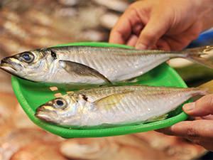 こんなに違う! 網どりの魚と「一本釣り」の魚を比べてみた