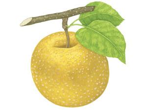 夏にうってつけのフルーツ「梨」。いますぐ食べたい、注目の3品種