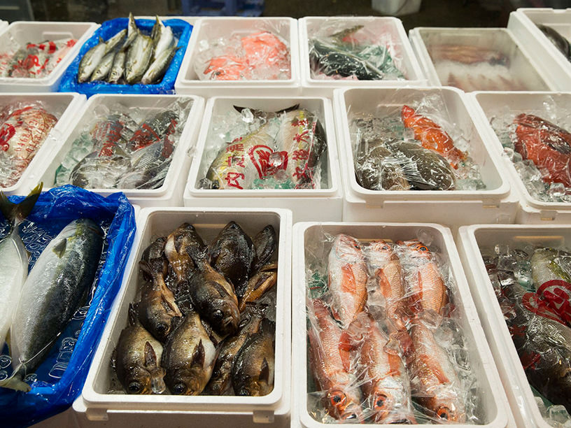 横浜魚市場