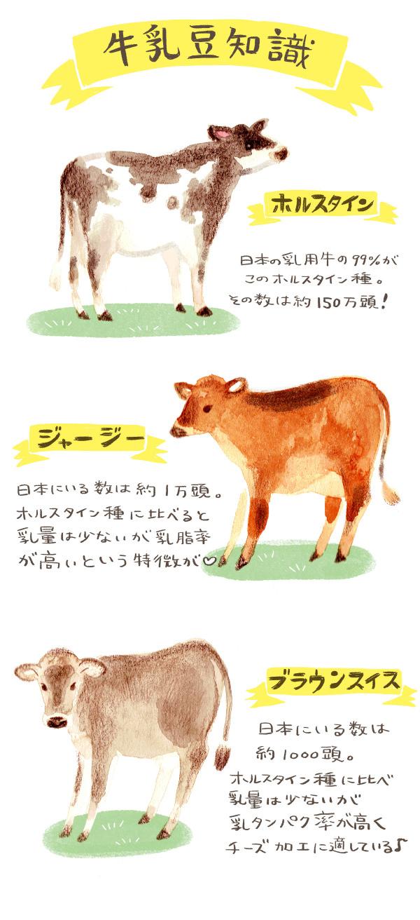乳牛の種類
