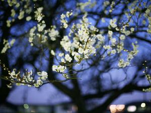 立春と雨水のイメージ