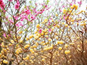 啓蟄と春分のイメージ
