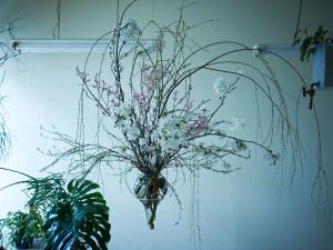 花見のイメージ