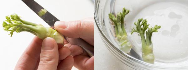 たらの芽のハカマをそぎ落とし、水に放すところ
