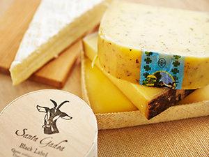 さまざま種類のチーズの集合