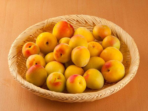 梅干しに使う肉厚で黄色く熟した梅
