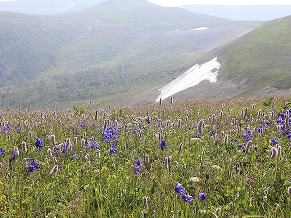 シベリアの自然