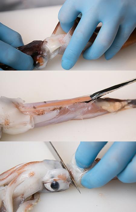 イカのわたを引き出すところ、スミを取り除くところ、胴と足を切り離すところ