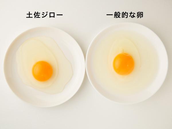 (左から)高知県土佐ジロー協会の土佐ジロー有精卵と一般的な鶏卵を割ったところ