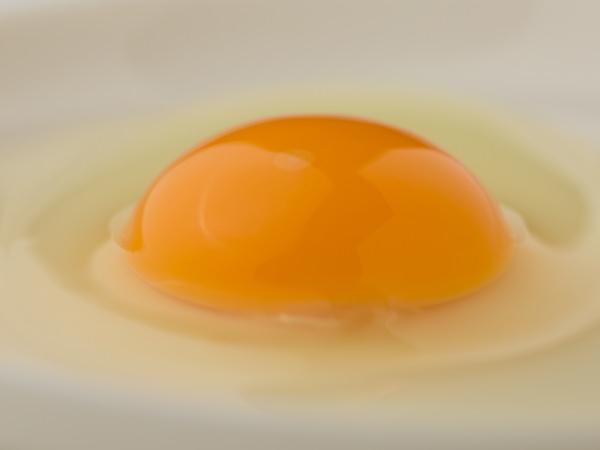 土佐ジロー有精卵