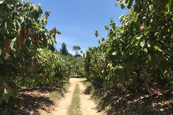 KOH'S FARM内の砂利道